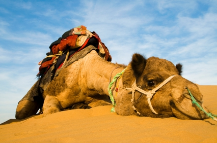 http://discoveryoursolutions.com/images/straw_broke_camel_back.jpg